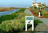 Redwood Shores Bay Trail
